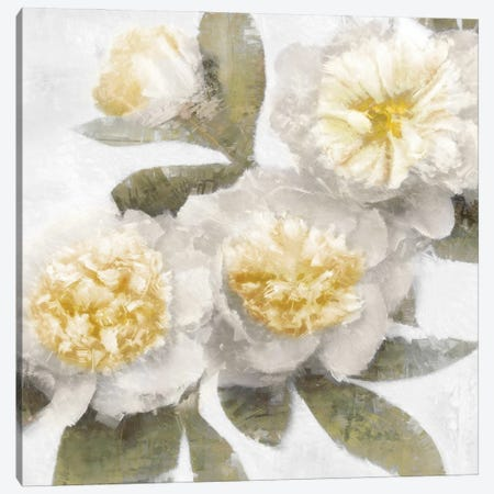 Ivory Bloom Canvas Print #EFO14} by Emily Ford Canvas Wall Art