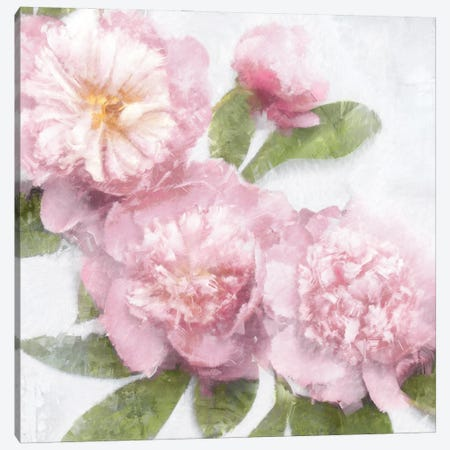 Pink Bloom I Canvas Print #EFO17} by Emily Ford Canvas Artwork