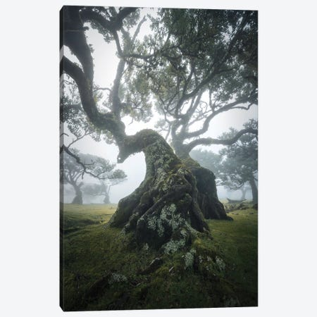 Dancing In The Mist Canvas Print #EFS106} by Enrico Fossati Canvas Art Print