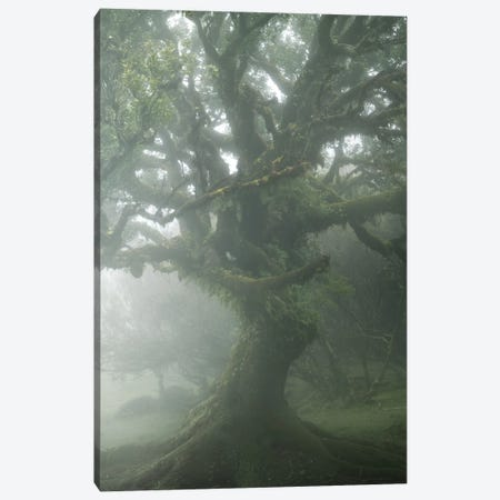 Enthroned In The Mist Canvas Print #EFS108} by Enrico Fossati Canvas Wall Art