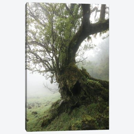 Tree Of Death Canvas Print #EFS123} by Enrico Fossati Canvas Wall Art