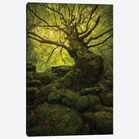 King Of The Forest Canvas Print #EFS16} by Enrico Fossati Canvas Wall Art