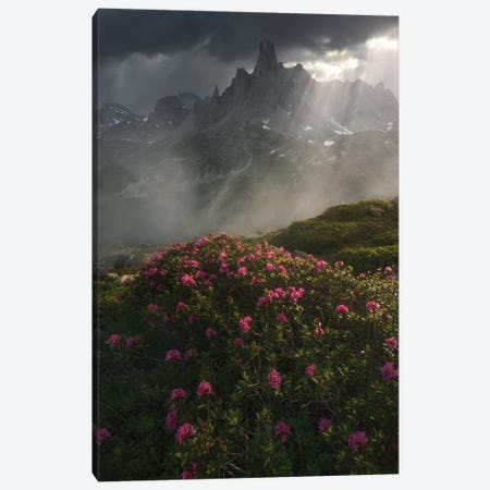 Scent Of Spring Canvas Print #EFS53} by Enrico Fossati Art Print