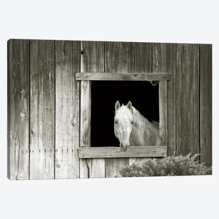 Welcome Mare Canvas Print #EGL1} by Ed Goldstein Canvas Artwork