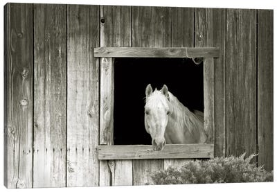 Welcome Mare Canvas Art Print
