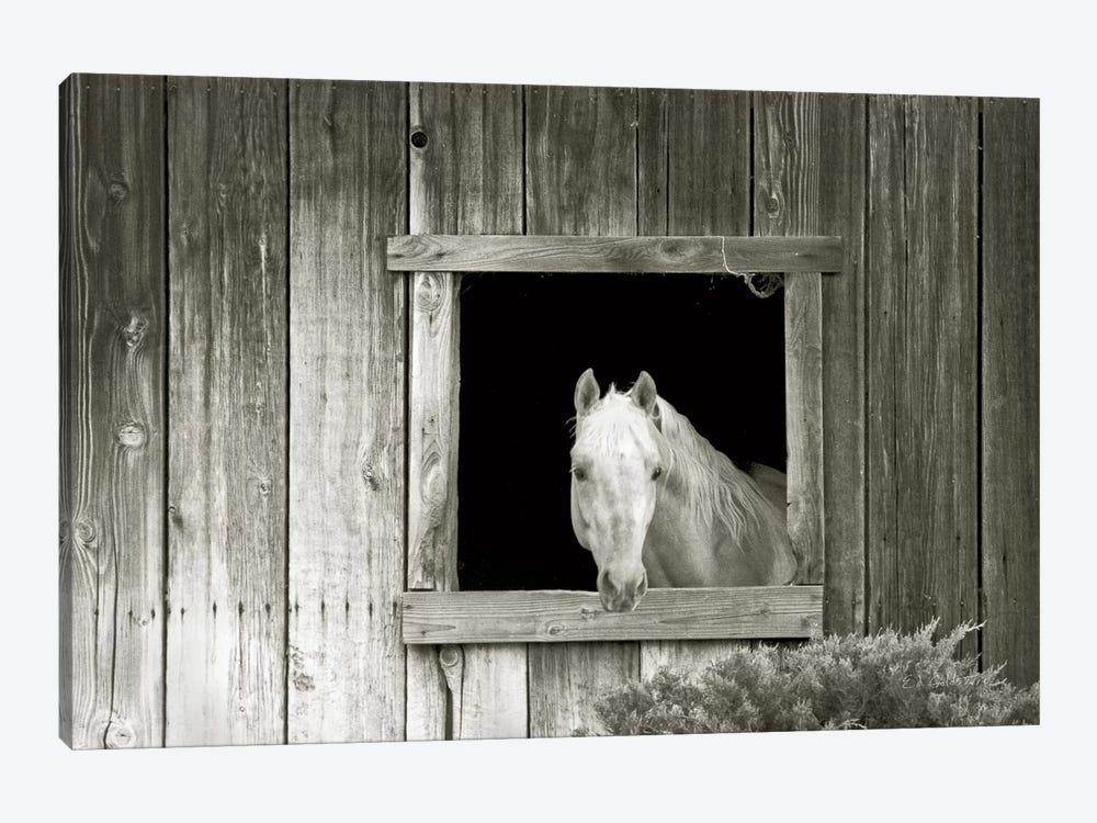 Welcome Mare by Ed Goldstein 1-piece Art Print