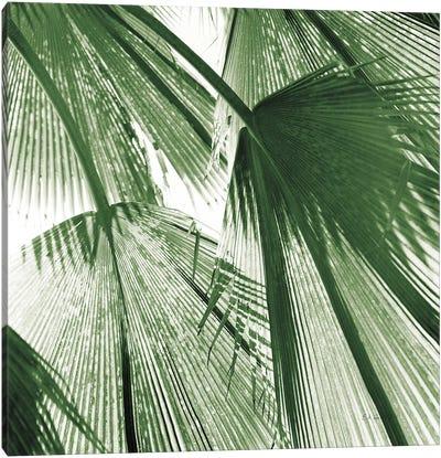 Leaf Abstract III Green Canvas Art Print