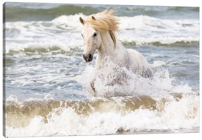 France, The Camargue, Saintes-Maries-de-la-Mer. Camargue horse in the Mediterranean Sea II Canvas Art Print