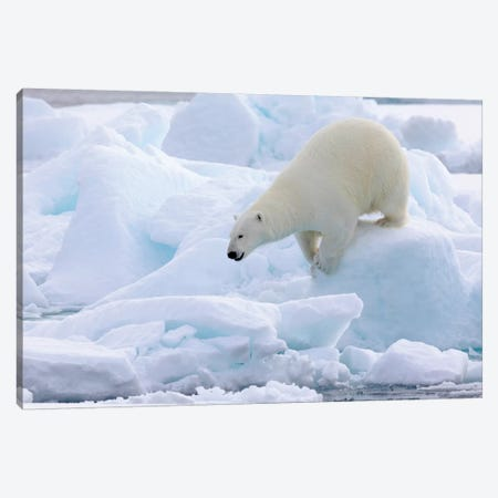 North Of Svalbard, Pack Ice. Portrait Of A Polar Bear Walking On The Pack Ice. Canvas Print #EGO119} by Ellen Goff Canvas Artwork