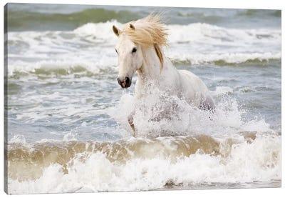 France, The Camargue, Saintes-Maries-de-la-Mer. Camargue horse in the Mediterranean Sea III Canvas Art Print
