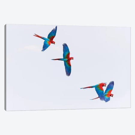 South America, Brazil, Mato Grosso do Sul, Jardim, Red-and-green macaws flying in the sinkhole I Canvas Print #EGO36} by Ellen Goff Canvas Art Print