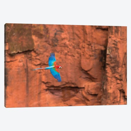 South America, Brazil, Mato Grosso do Sul, Jardim, Red-and-green macaws flying in the sinkhole II Canvas Print #EGO37} by Ellen Goff Canvas Print