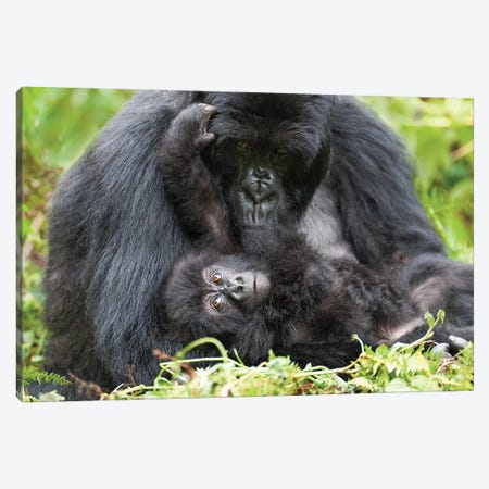 Female Mountain Gorilla With Her Young, Africa, Rwanda, Volcanoes National Park. Canvas Print #EGO39} by Ellen Goff Canvas Art
