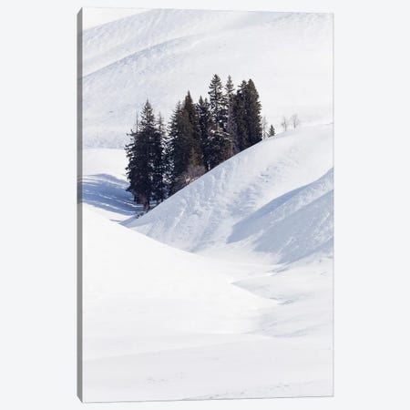Wyoming, Yellowstone NP, Lamar Valley. Winter scene of the trees among the hills Canvas Print #EGO72} by Ellen Goff Canvas Wall Art