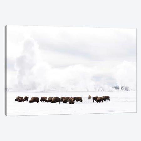 Wyoming, Yellowstone NP. American bison struggling to find grass beneath the winter snow pack. Canvas Print #EGO84} by Ellen Goff Canvas Wall Art