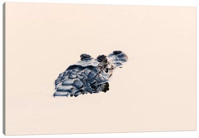 Brazil, The Pantanal. The head of a black caiman shows up in the still water. Canvas Art Print