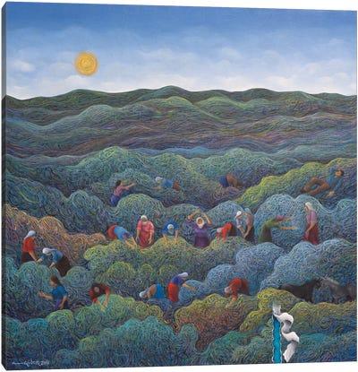 Anatolian Spring Canvas Art Print