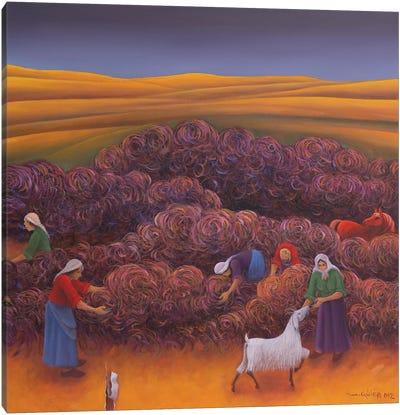Winnowing Canvas Art Print