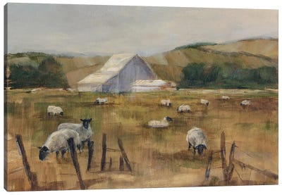 Grazing Sheep I Canvas Art Print