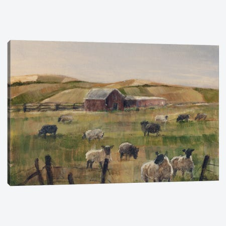 Grazing Sheep II Canvas Print #EHA120} by Ethan Harper Canvas Print