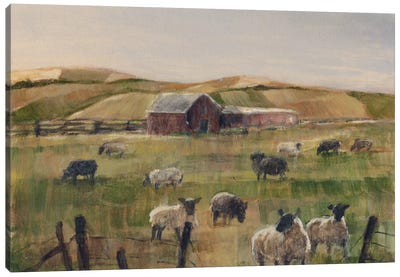 Grazing Sheep II Canvas Art Print