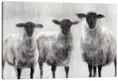 Rustic Sheep I Canvas Art Print