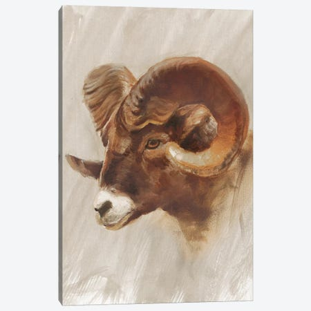 Western American Animal Study I Canvas Print #EHA186} by Ethan Harper Canvas Wall Art