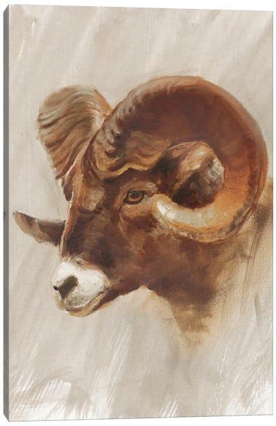 Western American Animal Study I Canvas Art Print