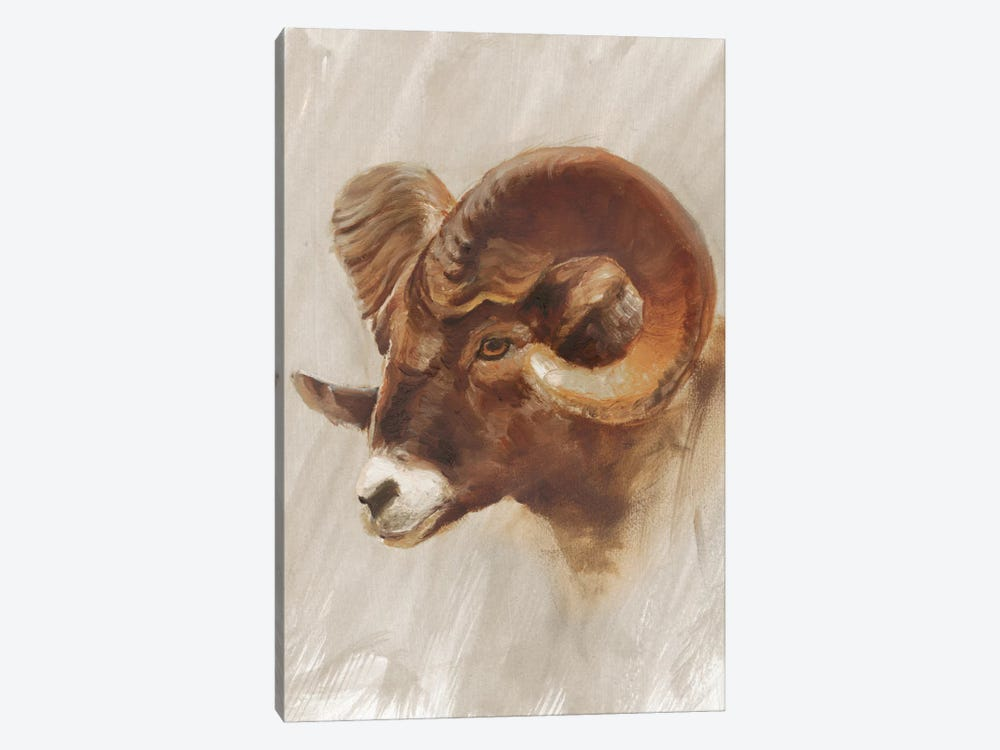 Western American Animal Study I by Ethan Harper 1-piece Canvas Art