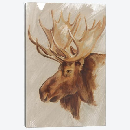Western American Animal Study II Canvas Print #EHA187} by Ethan Harper Canvas Art