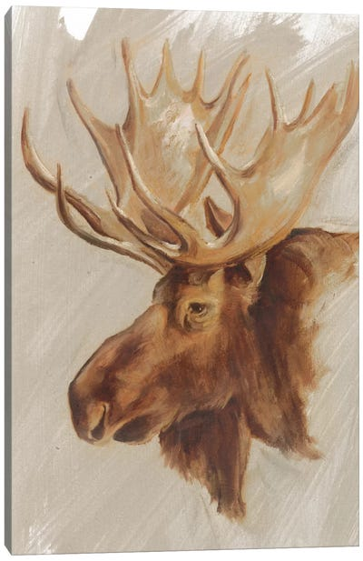 Western American Animal Study II Canvas Art Print
