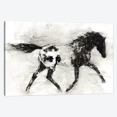 Rustic Appaloosa I Canvas Print #EHA217} by Ethan Harper Canvas Artwork