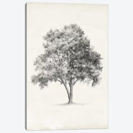 Vintage Arbor Study I Canvas Print #EHA219} by Ethan Harper Canvas Print