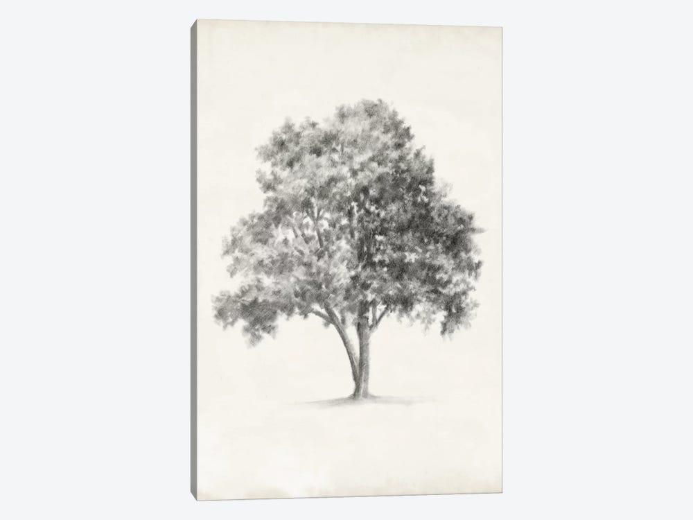 Vintage Arbor Study I by Ethan Harper 1-piece Canvas Art