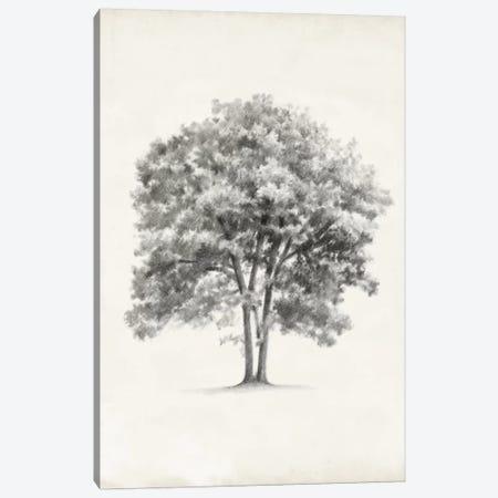 Vintage Arbor Study II Canvas Print #EHA220} by Ethan Harper Canvas Art