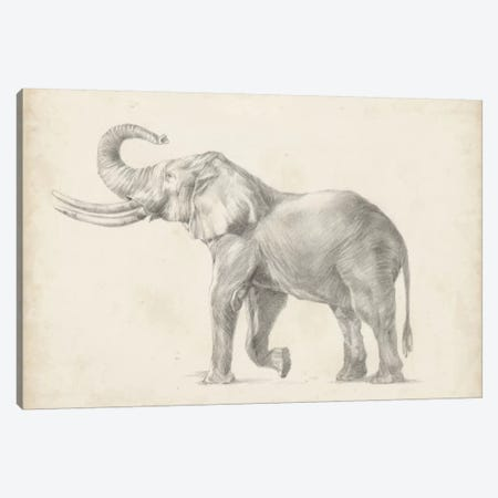 Elephant Sketch I Canvas Print #EHA231} by Ethan Harper Canvas Print