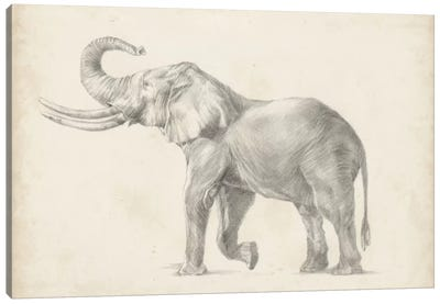Elephant Sketch I Canvas Art Print