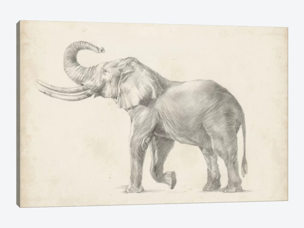 Elephant Sketch I by Ethan Harper 1-piece Canvas Wall Art