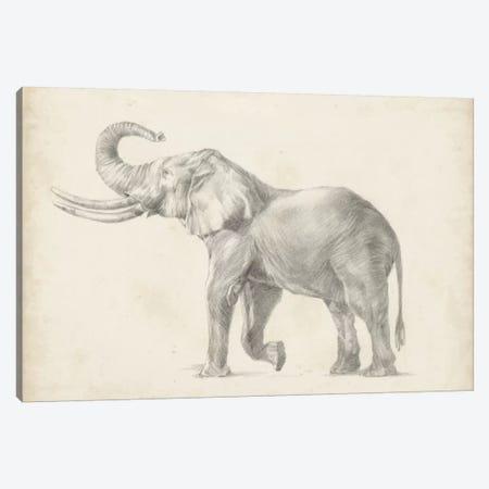 Elephant Sketch I Canvas Print #EHA231} by Ethan Harper Canvas Print