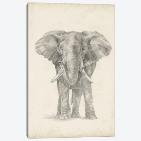 Elephant Sketch II Canvas Print #EHA232} by Ethan Harper Canvas Art Print