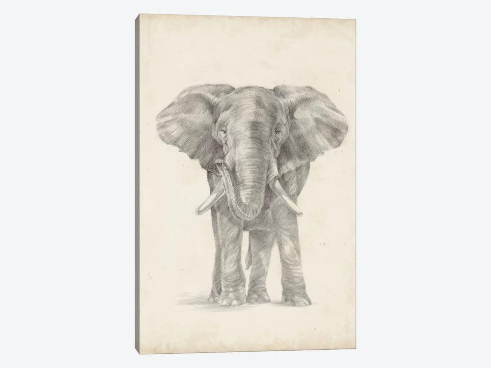 Elephant Sketch II by Ethan Harper 1-piece Canvas Art Print