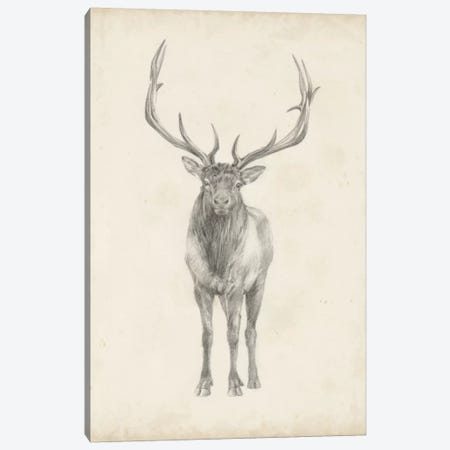 Elk Study Canvas Print #EHA233} by Ethan Harper Canvas Art Print