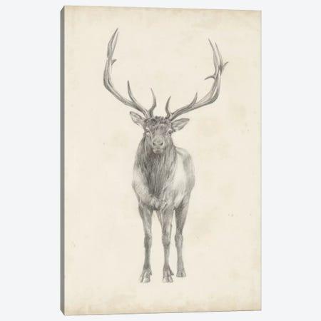 Elk Study Canvas Print #EHA233} by Ethan Harper Canvas Art Print