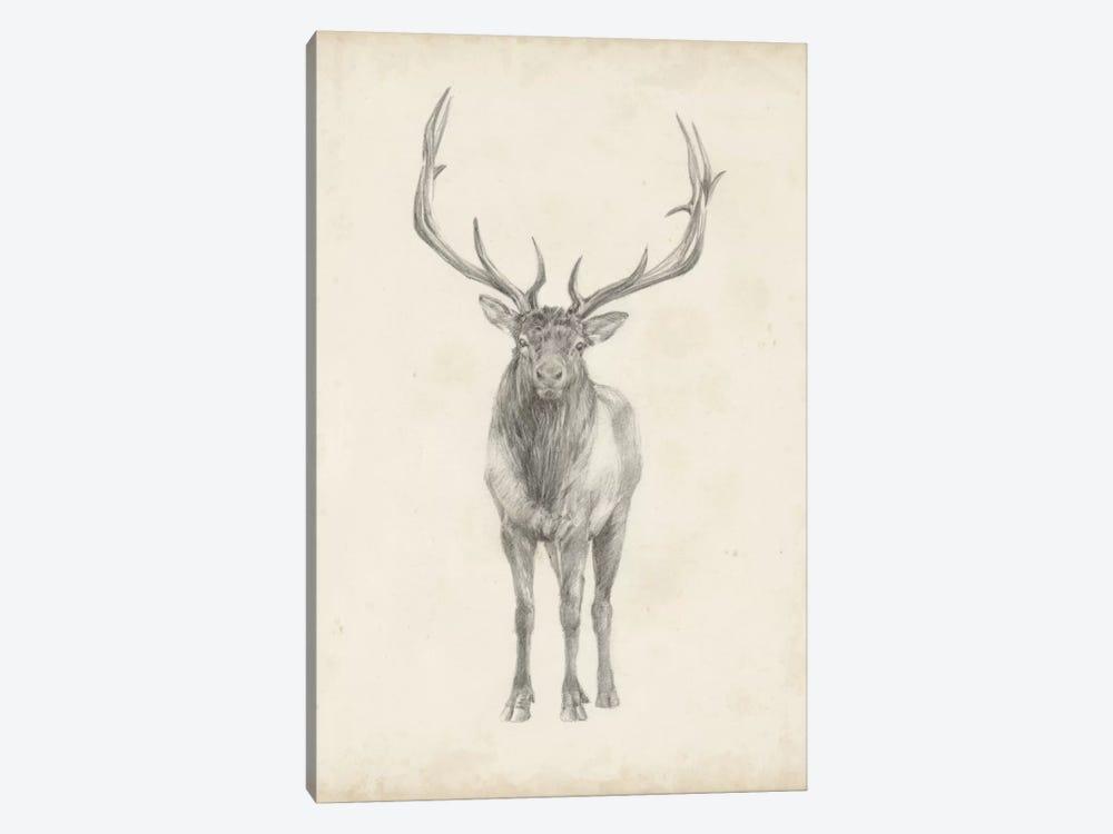 Elk Study by Ethan Harper 1-piece Canvas Artwork