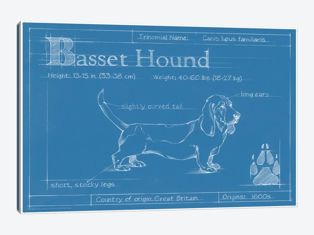 Blueprint Of A Basset Hound by Ethan Harper 1-piece Canvas Print