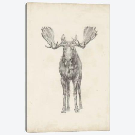 Moose Study Canvas Print #EHA244} by Ethan Harper Art Print