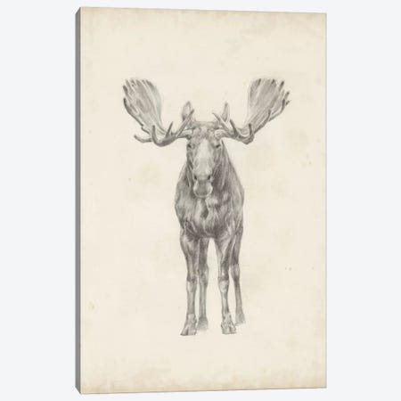 Moose Study Canvas Print #EHA244} by Ethan Harper Art Print