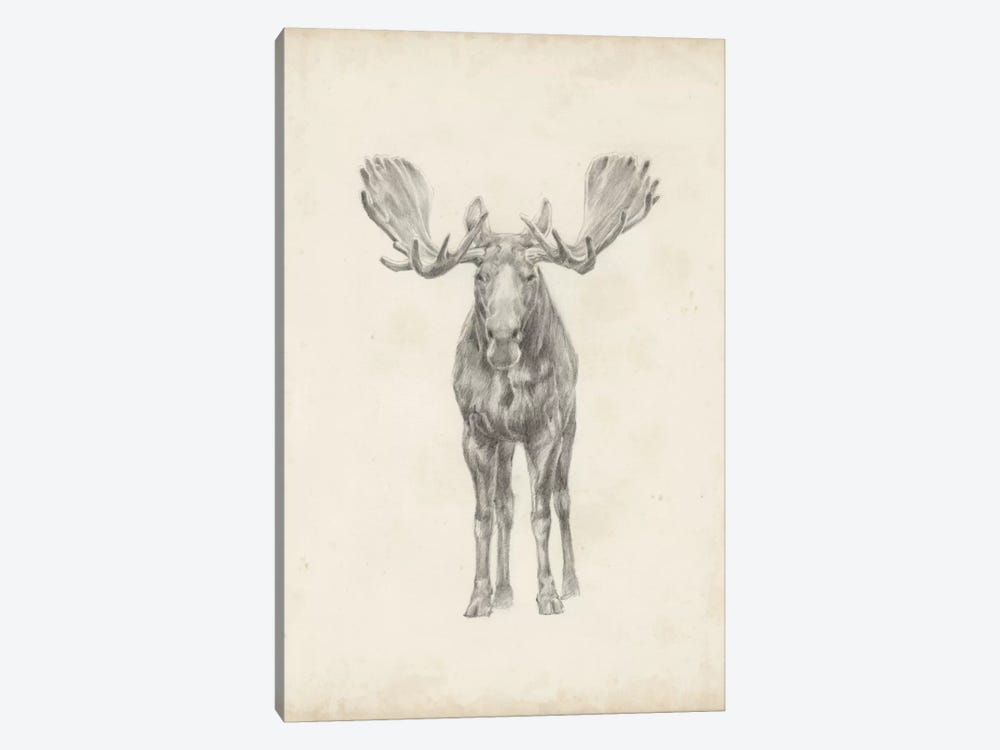 Moose Study by Ethan Harper 1-piece Canvas Art