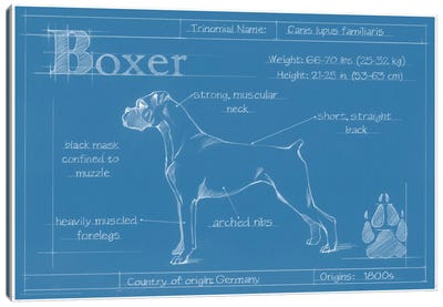 Blueprint Of A Boxer Canvas Art Print