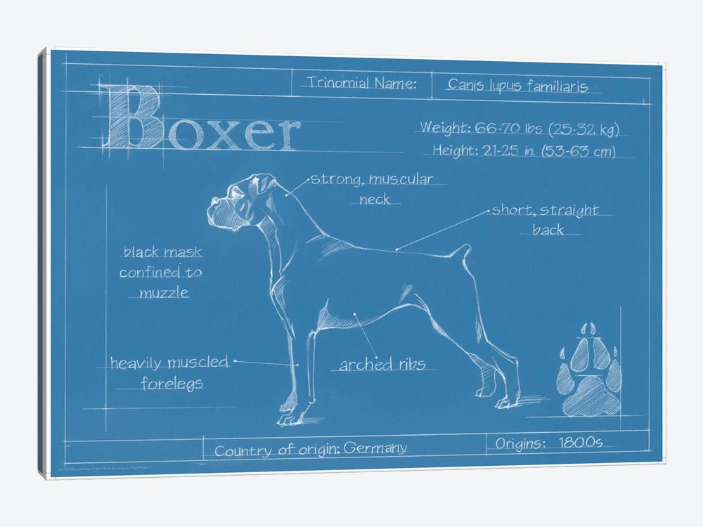 Blueprint Of A Boxer by Ethan Harper 1-piece Canvas Art